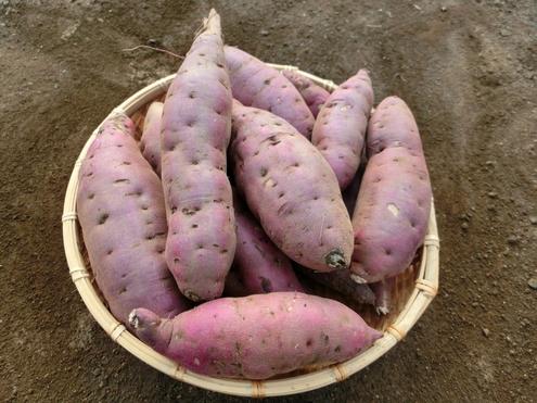 サツマイモの写真