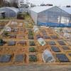 三鷹台「高橋体験農園」の写真