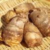 サトイモの写真