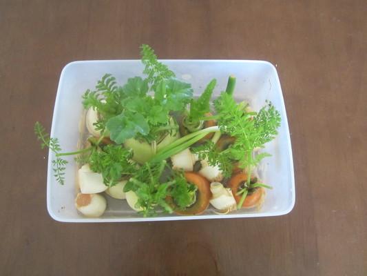 すくすく 根菜類 アブラナ科 ダイコン